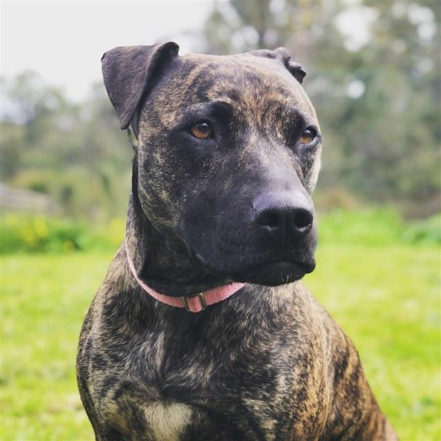 Photo of Caia (Was Rhea)