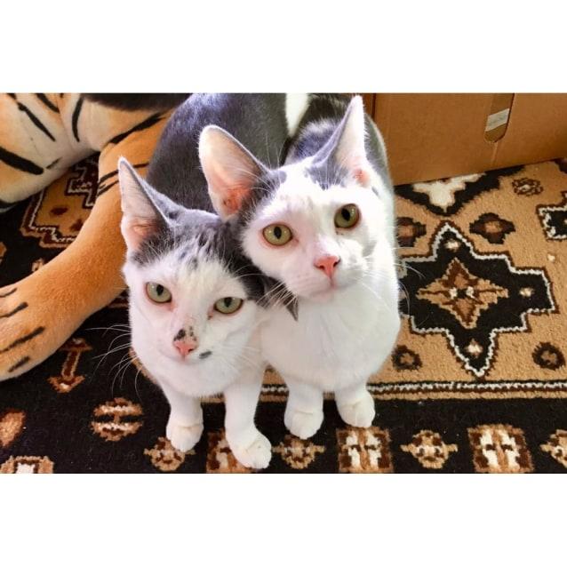 Photo of Yoshi & Koji