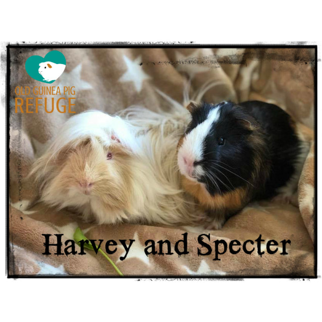 Photo of Harvey And Specter