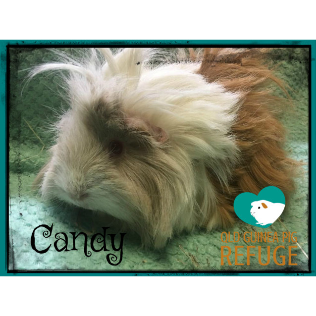 Photo of Candy
