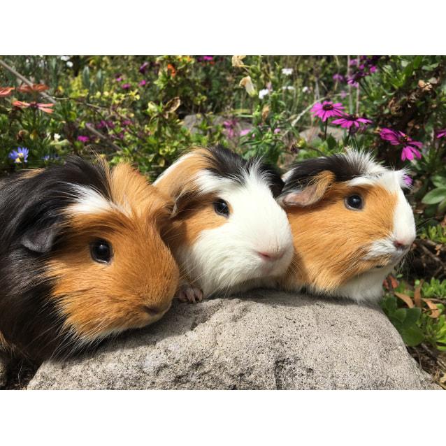 Photo of Draco, Ginny & Luna