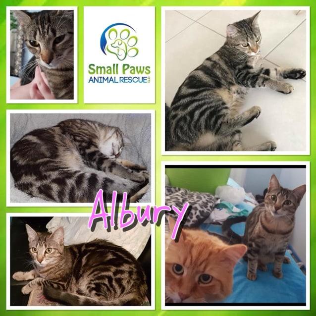 Photo of Albury