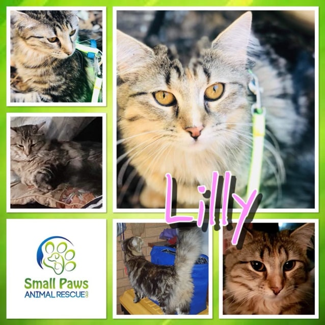 Photo of Lilly
