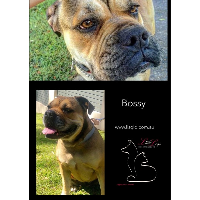 Photo of Bossy