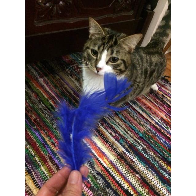 Photo of Frankie   Meet Me At Cat Lounge, Neko Hq Preston