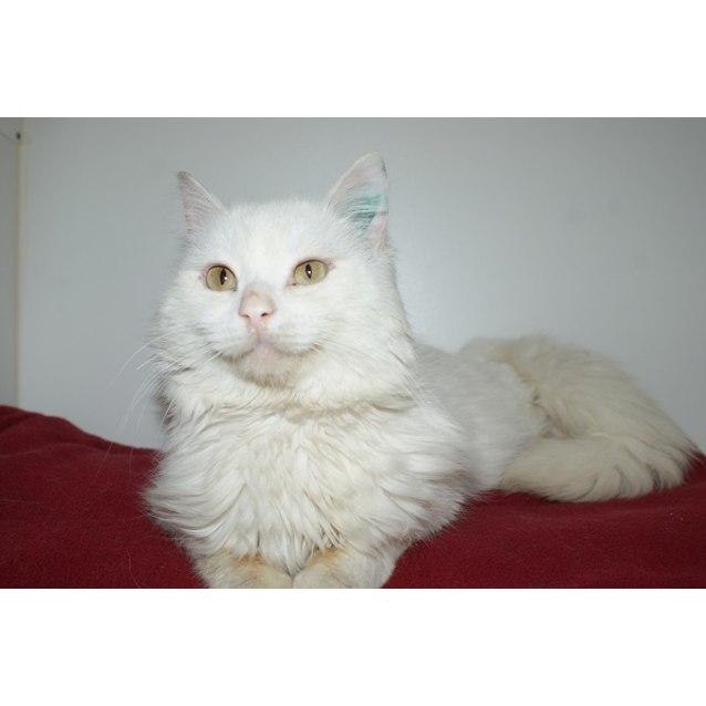 Photo of Frosty Sta002940