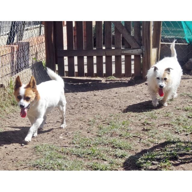 Photo of Daisy And Rusty
