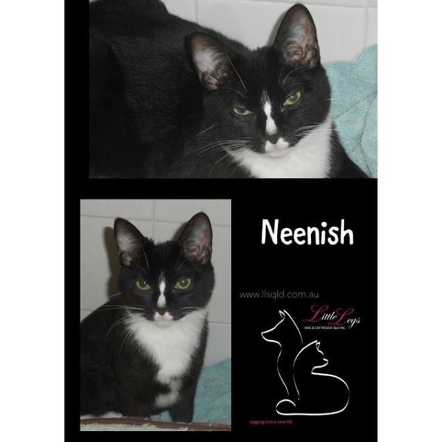 Photo of Neenish