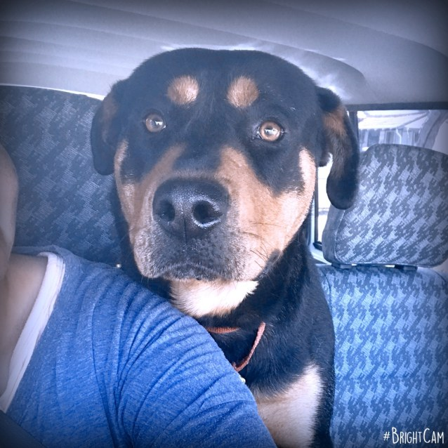 Photo of Rocky **A Well Mannered Boy **