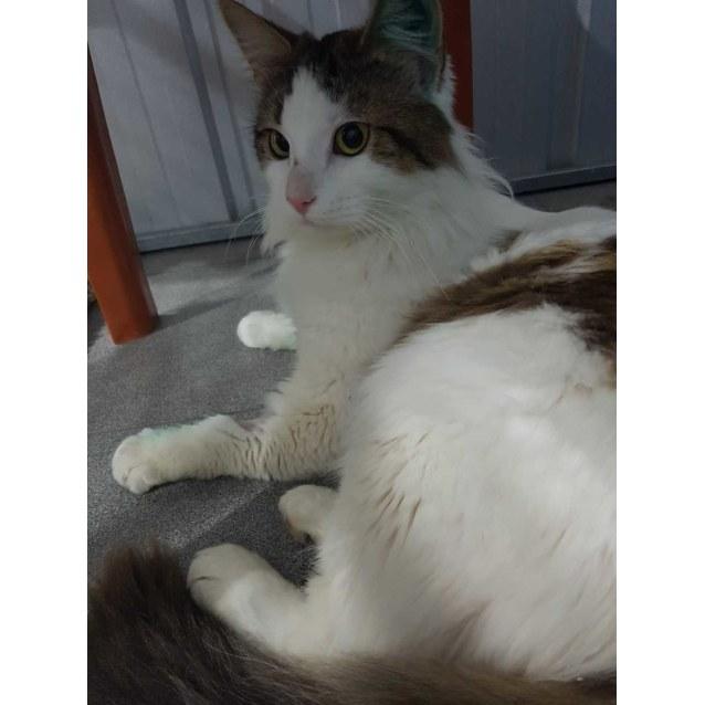 Photo of Tubby