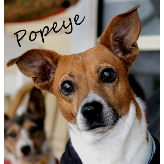 Photo of Popeye