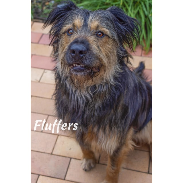 Photo of Fluffers