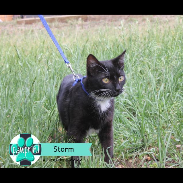 Photo of Storm