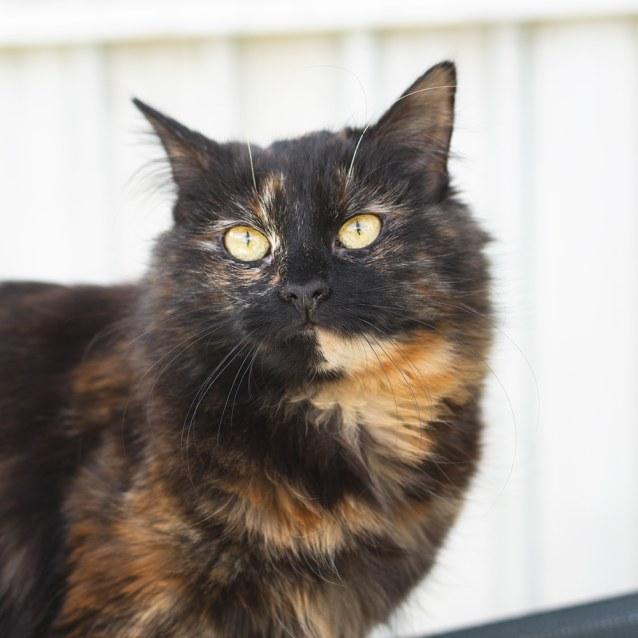 Photo of Celia (88775)