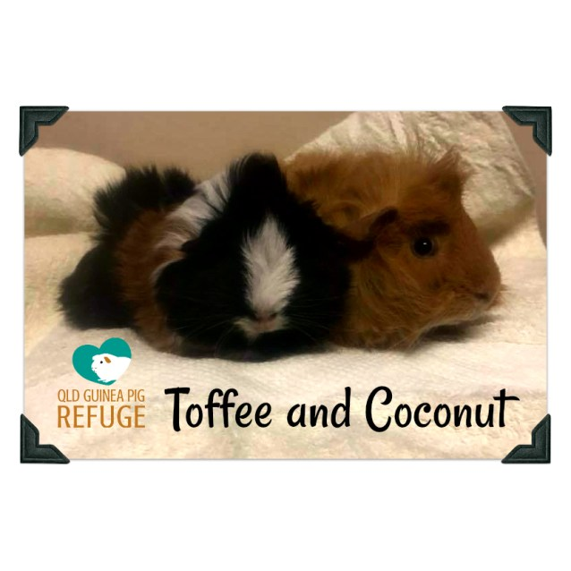Photo of Toffee And Coconut