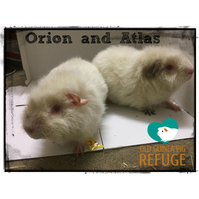 Photo of Orion And Atlas