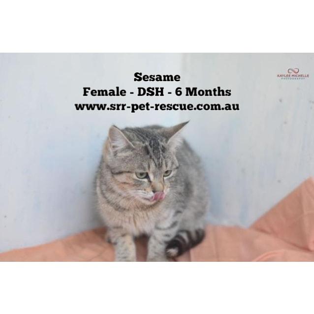 Photo of Sesame