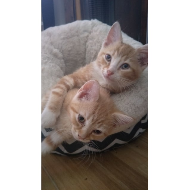 Photo of Rusty And Lila
