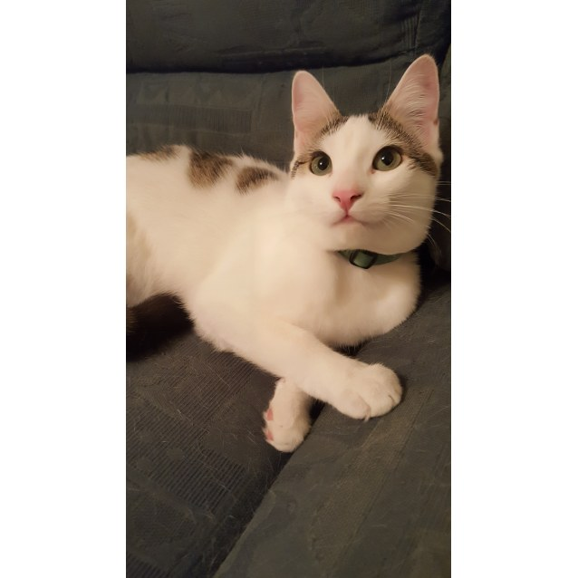 Photo of Lucky Prince, The Cat That Lives Up To His Name!