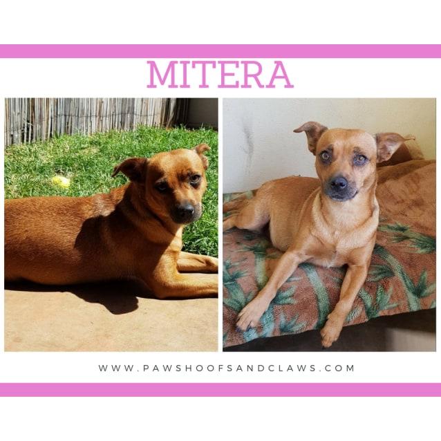 Photo of Mitera
