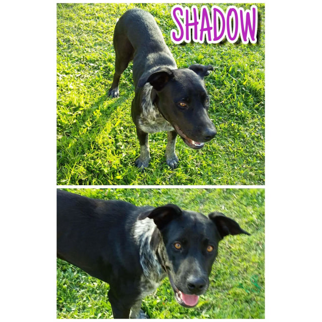 Photo of Shadow