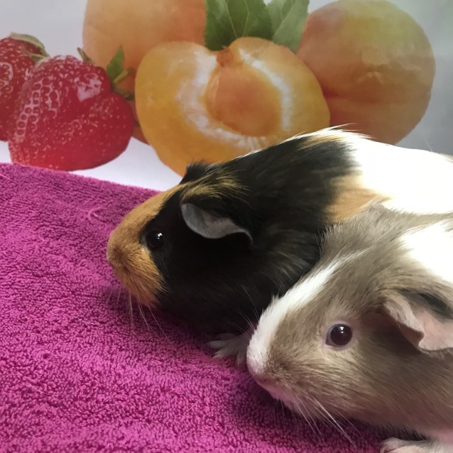 Photo of Strawberry & Peaches