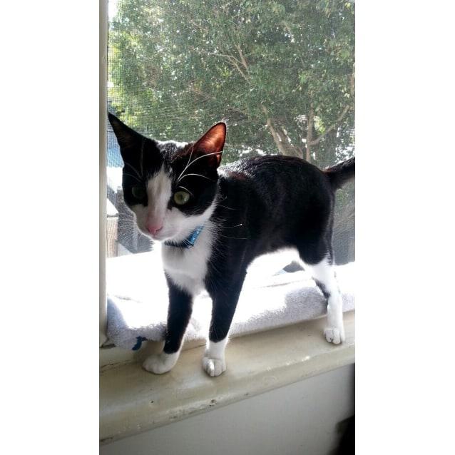 Photo of Callisto