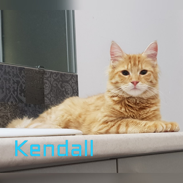 Photo of Kendall