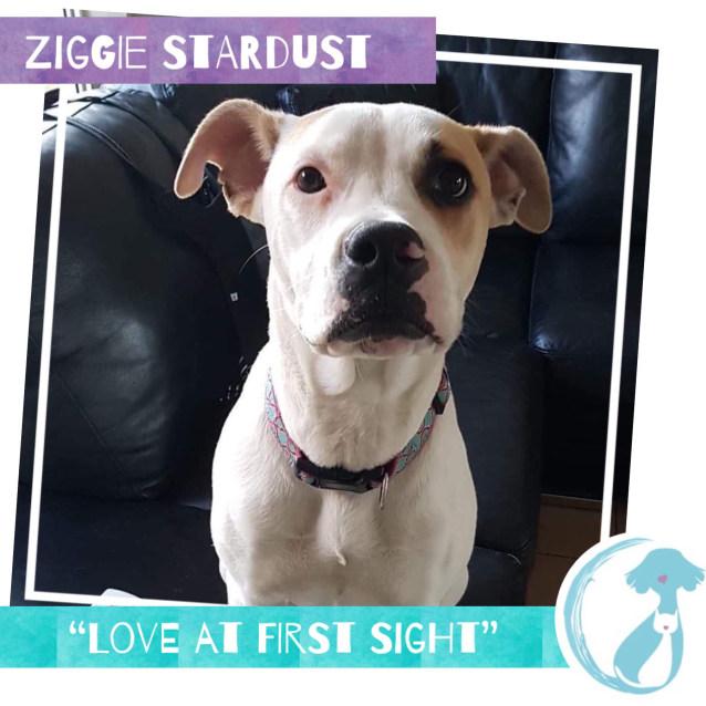 Photo of Ziggie Stardust