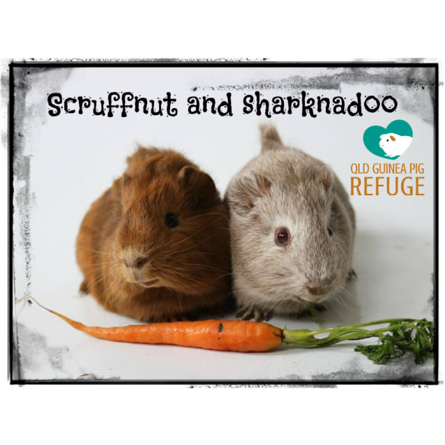 Photo of Scruffnut And Sharknadoo (Unsuitable For Children)