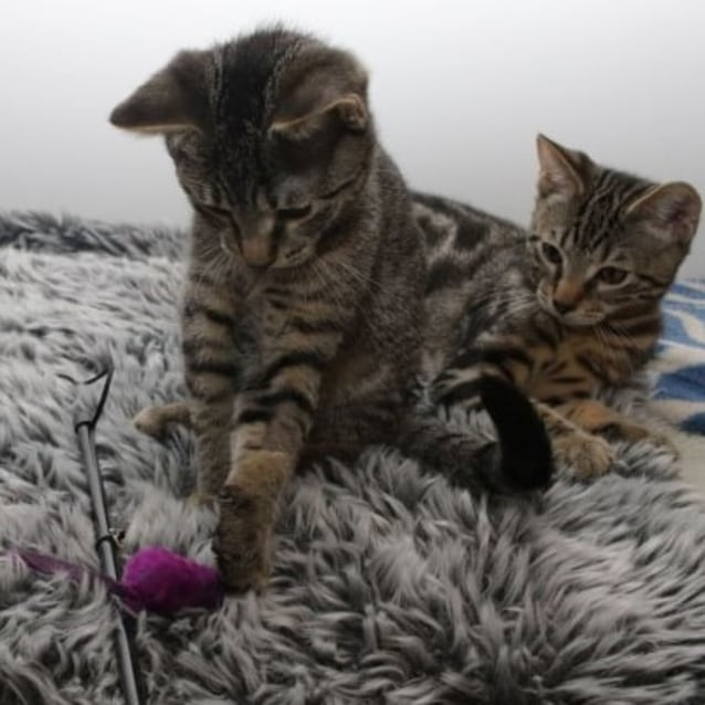 Photo of Louis & Louie