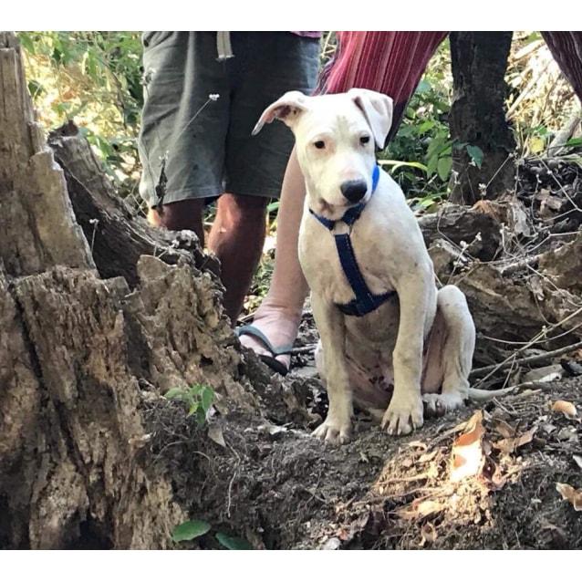 Photo of Snoop