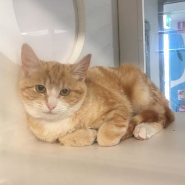 Photo of Ginger 900991