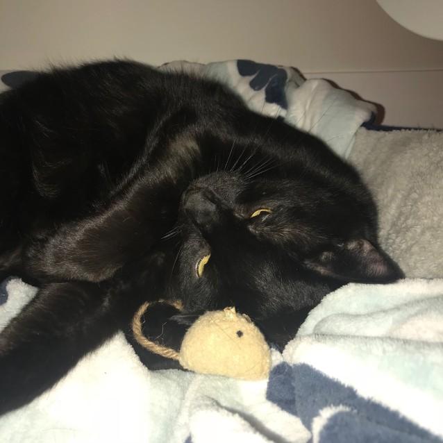Photo of Blacky
