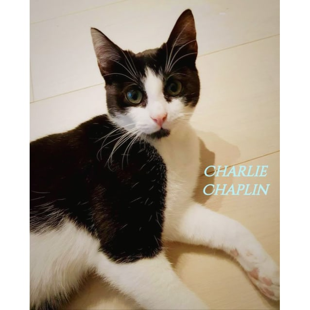 Photo of Charlie Chaplin! Dog In A Cat's Body