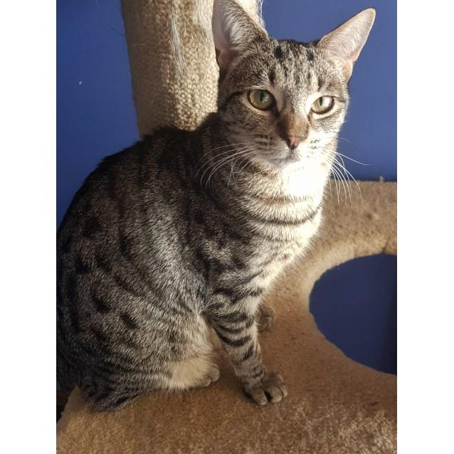 Photo of Myah *Sydney Animal Rescue Inc*