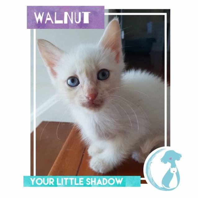 Photo of Walnut