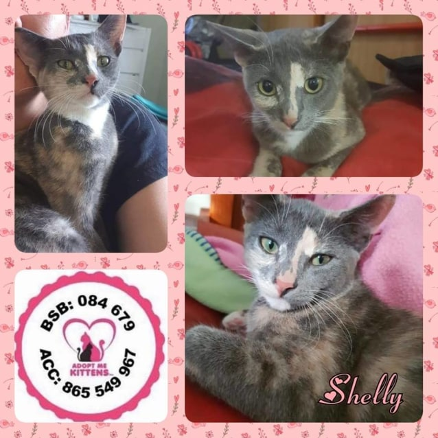 Photo of Shelly