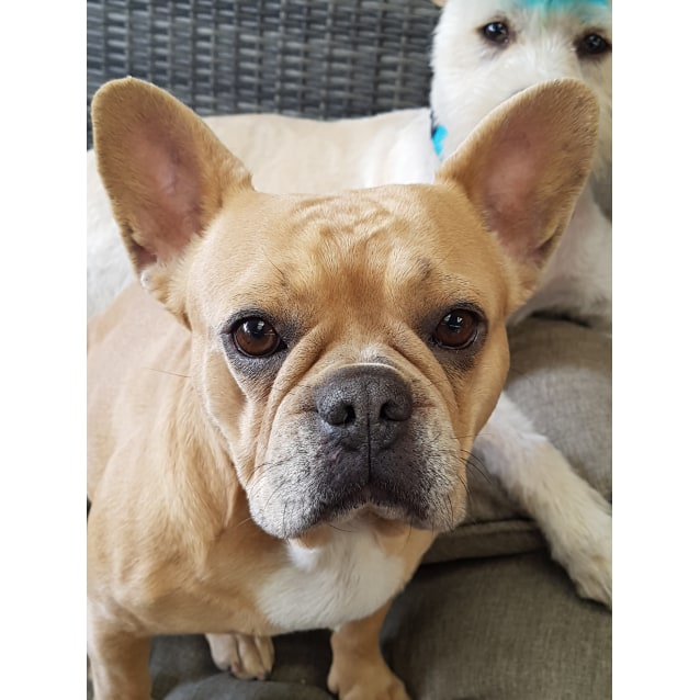 Photo of Tootsie