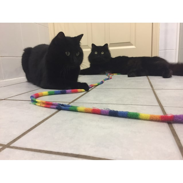 Photo of Mihawk (Available) & Baelfire (Adopted)