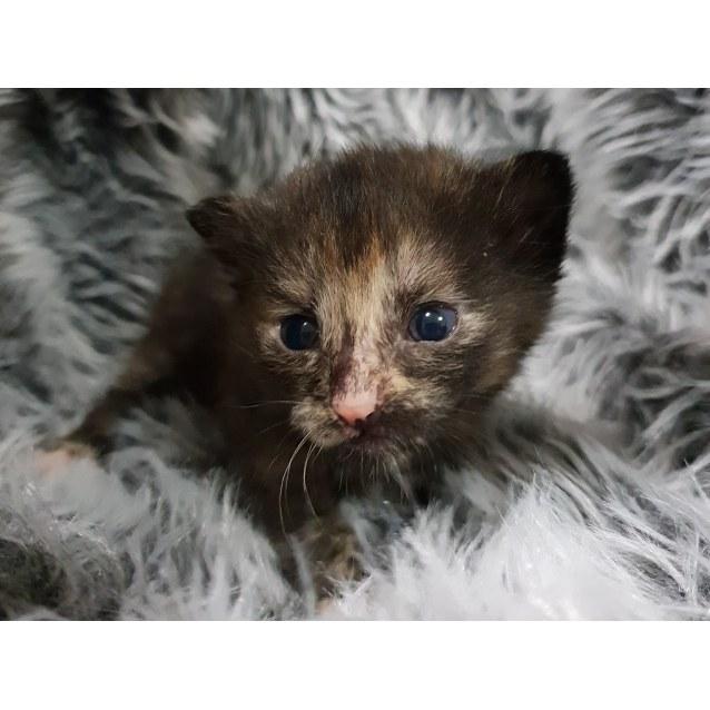 Photo of Elba Aka Possum