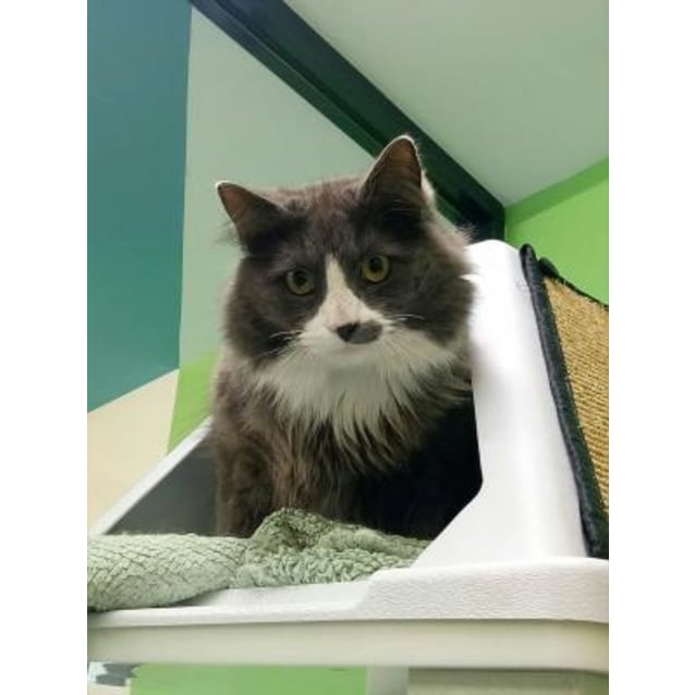 Photo of Smudge 903259