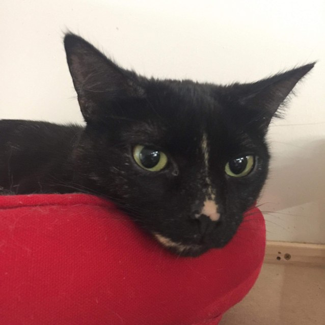 Photo of Marmalade   Meet Me At Cat Lounge  Neko Hq Preston