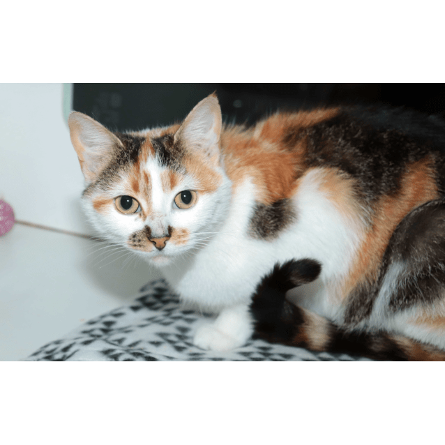 Photo of Sprinkles   Meet Me At Cat Lounge  Neko Hq Preston