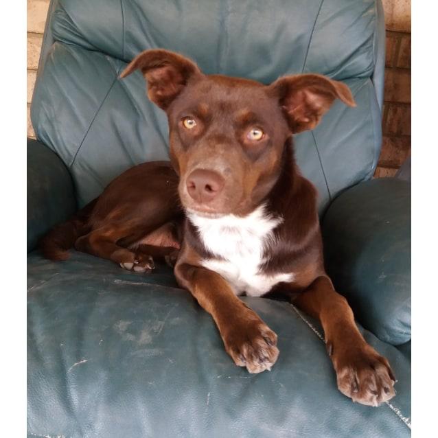 Photo of Choco