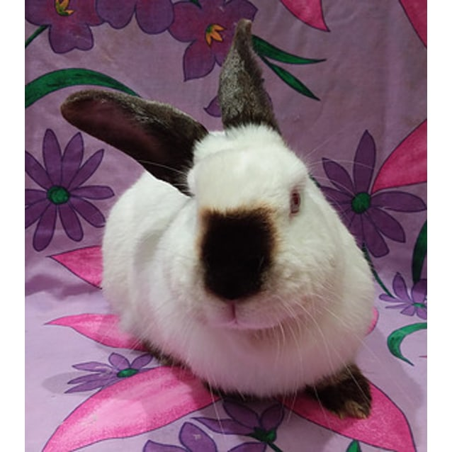 Photo of Papaya (Vib)