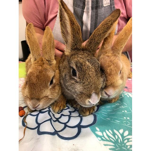 Photo of Rosaleen, Maple & Nutmeg