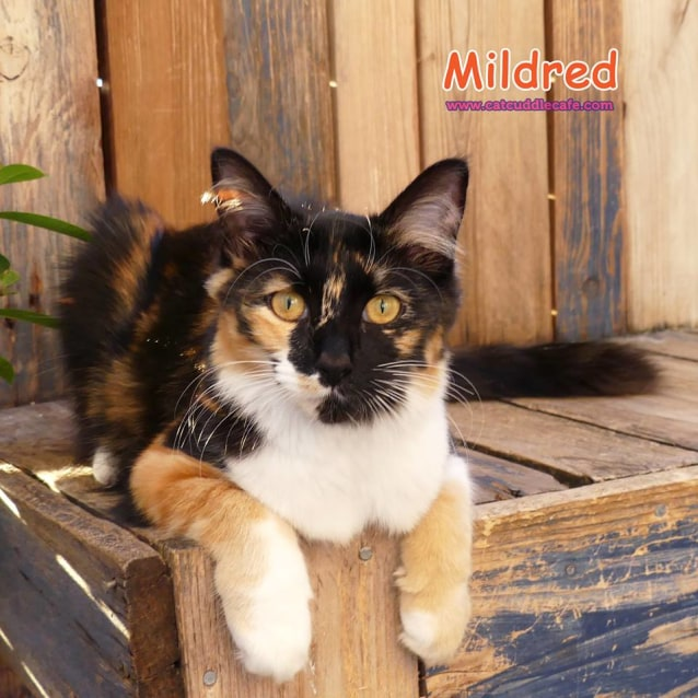 Photo of Mildred