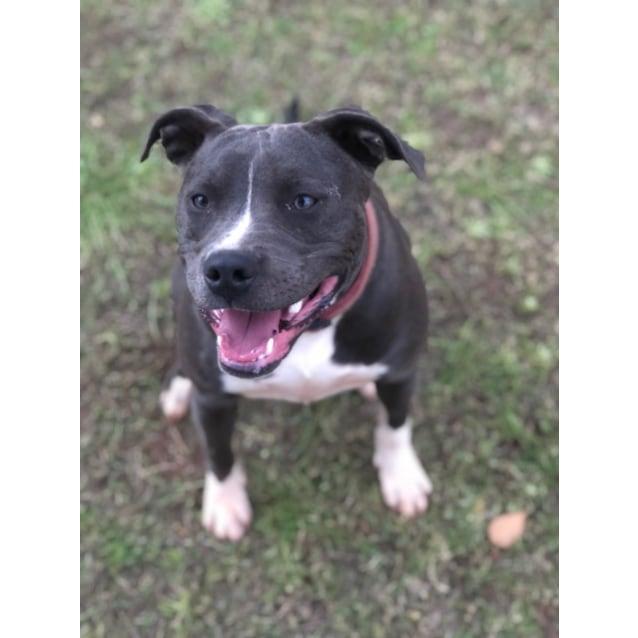 Photo of Elsa – Nd699 * Adoption Pending
