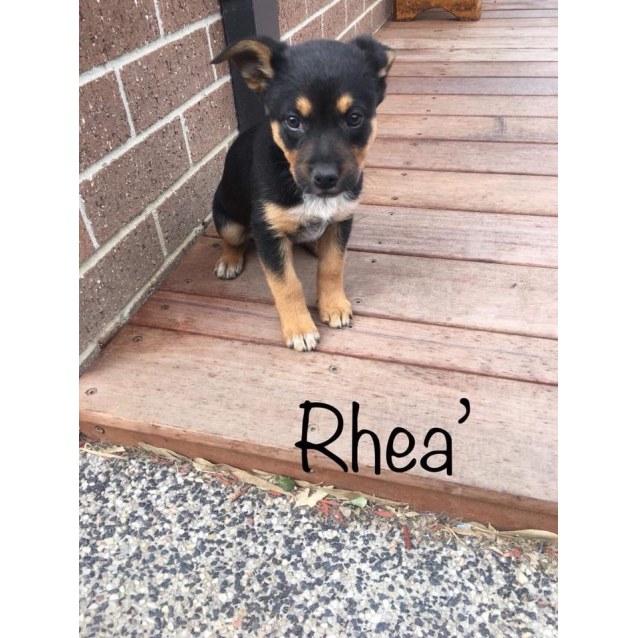 Photo of Rhea